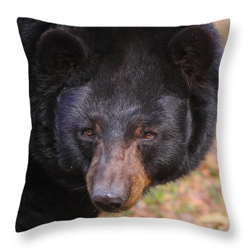 Florida Black Bear Throw Pillow