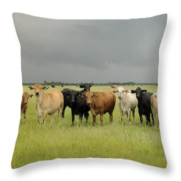 Florida Cattle Ranch Throw Pillow