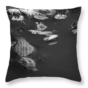 Throw Pillow featuring the photograph Florida Gator by Jason Moynihan