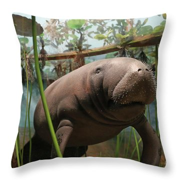 Florida Manatee Diorama Throw Pillow