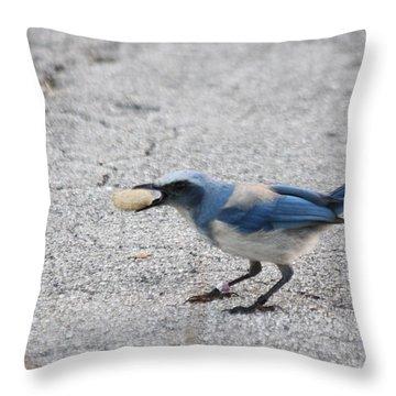 Florida Scrub Jay Throw Pillow