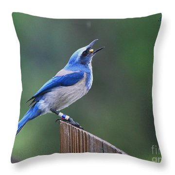 Florida Scrub Jay Eating Throw Pillow