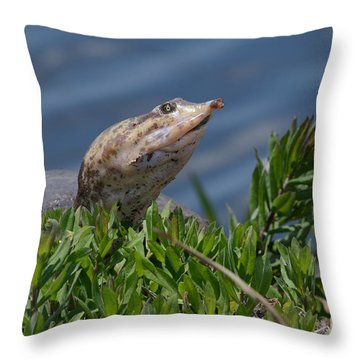 Florida Softshell In Georgia Throw Pillow by Kathy Gibbons