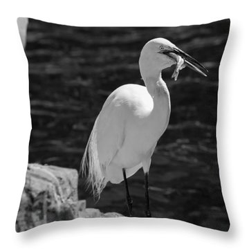 Florida White Egret Throw Pillow
