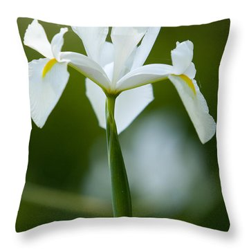 Flower At Magnolia Plantation Throw Pillow
