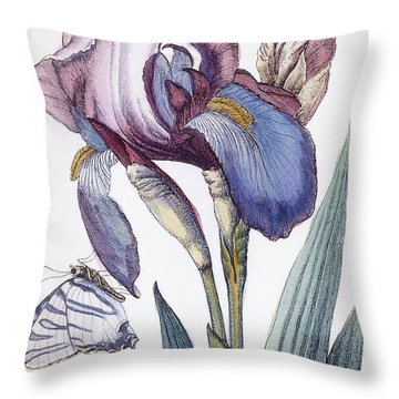 Flower By Maria Sibylla Graff Merian Throw Pillow