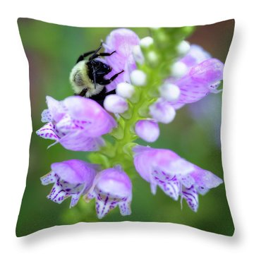 Throw Pillow featuring the photograph Flower Climbing by Eduard Moldoveanu