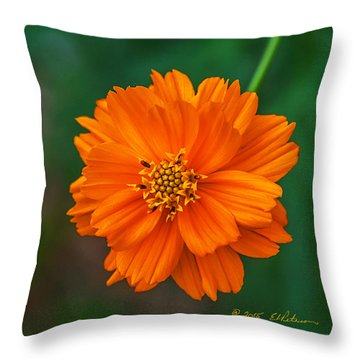Flower Color Throw Pillow by Edward Peterson