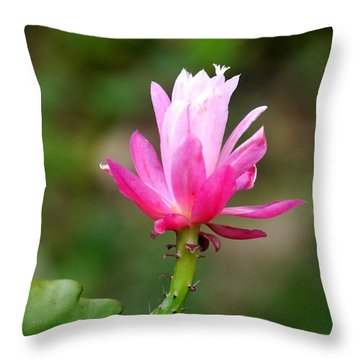 Flower Edition Throw Pillow by Bernd Hau