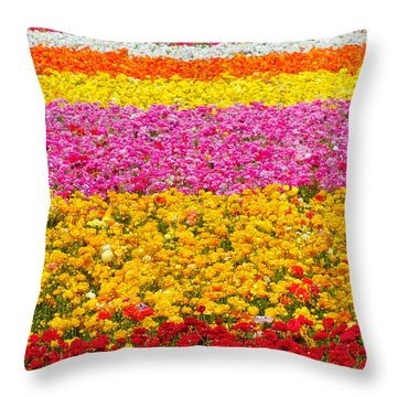 Flower Fields Carlsbad Ca Giant Ranunculus Throw Pillow by Christine Till