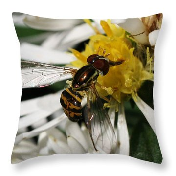 Throw Pillow featuring the photograph Flower Fly On Wildflower by William Selander