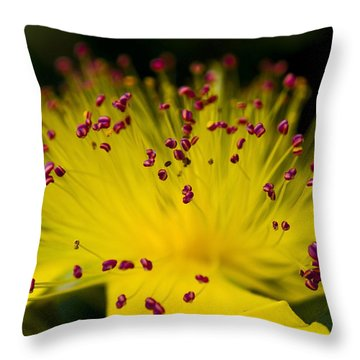 Flower In Macro Throw Pillow by Svetlana Sewell