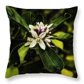 Flower Of The Lemon Tree Throw Pillow