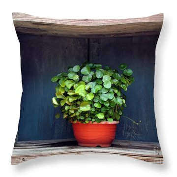 Flower Pot In A Window Throw Pillow by Yali Shi