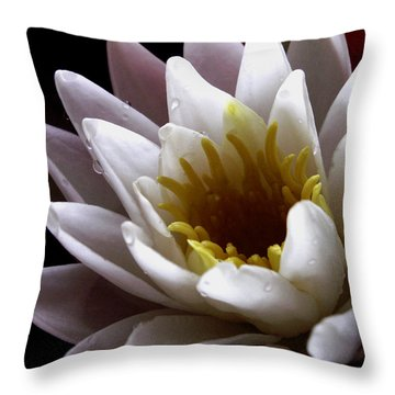Throw Pillow featuring the photograph Flower Waterlily by Nancy Griswold