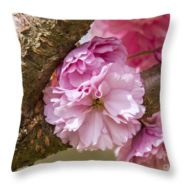 Flowering Almond IIi Throw Pillow