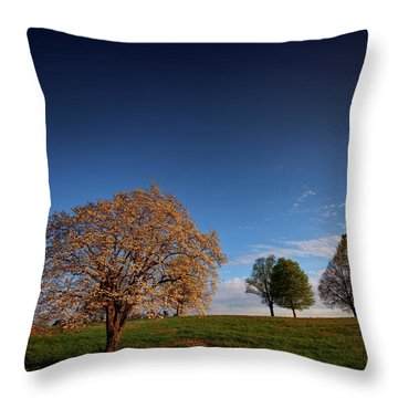 Flowering Dogwood At Valley Forge Throw Pillow