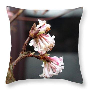 Flowering In December Throw Pillow