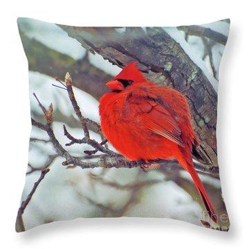 Fluffed Up Male Cardinal Throw Pillow
