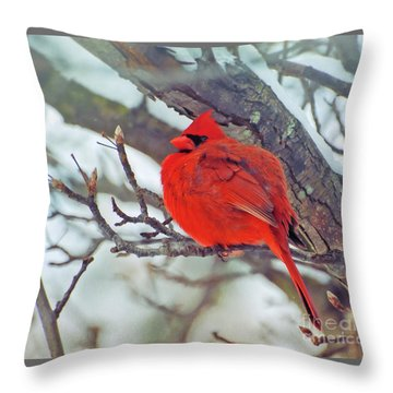 Fluffed Up Male Cardinal Throw Pillow