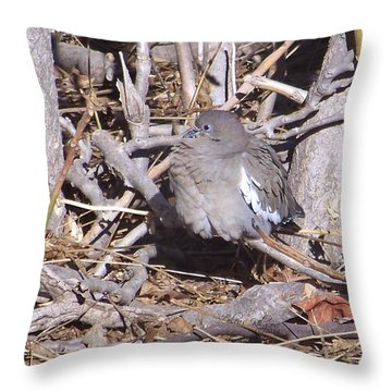 Fluffy Dove Throw Pillow