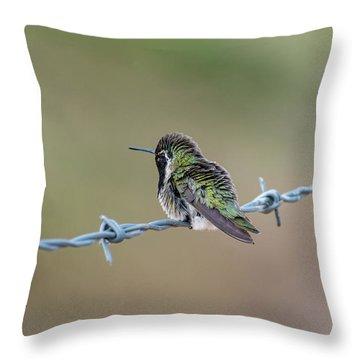 Fluffy Hummingbird Throw Pillow