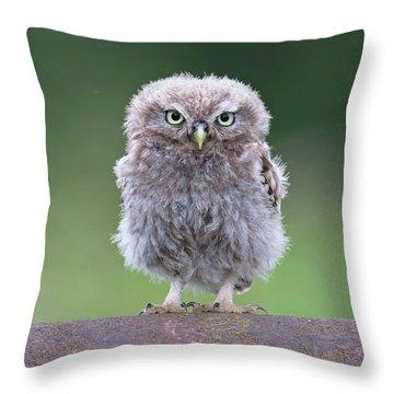 Fluffy Little Owl Owlet Throw Pillow