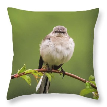 Fluffy Mockingbird Throw Pillow by Terry DeLuco