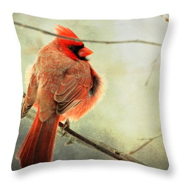 Fluffy Winter Cardinal Throw Pillow