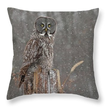 Flurries In The Forecast Throw Pillow
