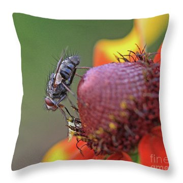Fly A Way Throw Pillow