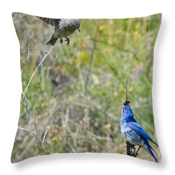 Flyby Flirt Throw Pillow by Mike Dawson