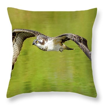 Flying Osprey Throw Pillow