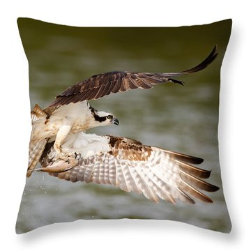 Flying Osprey With Fish Throw Pillow