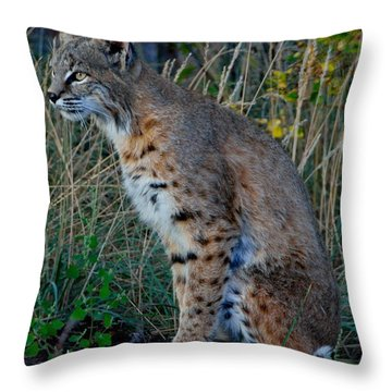Focused On The Hunt 2 Throw Pillow