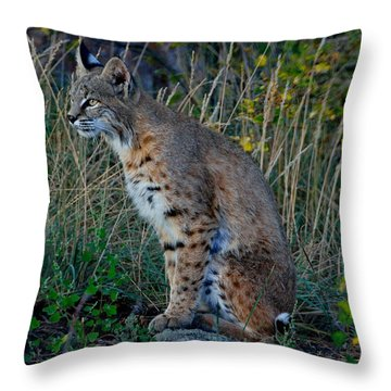 Focused On The Hunt Throw Pillow
