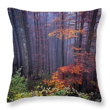 Throw Pillow featuring the photograph Fog And Forest Colours by Elena Elisseeva