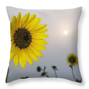 Foggy Sunflowers Throw Pillow by Rob Graham