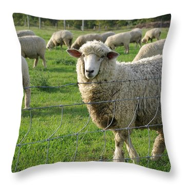 Follow Me Throw Pillow by Linda Mishler