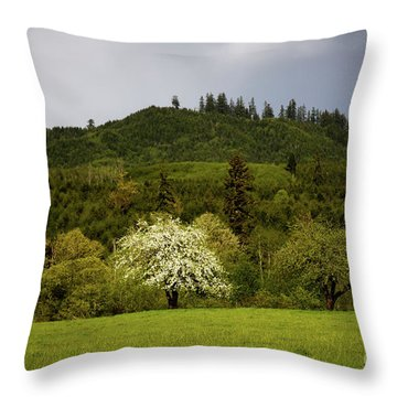 Follow The Light In The Forest Throw Pillow by Jon Burch Photography