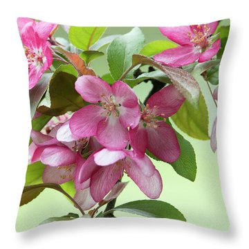 Throw Pillow featuring the photograph For The Beauty Of The Earth by Skip Tribby