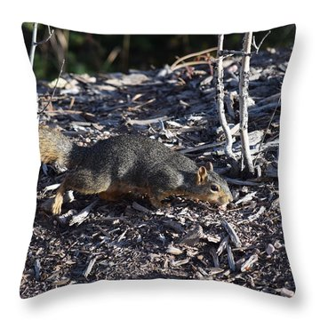 Squirrel Pprh Woodland Park Co Throw Pillow