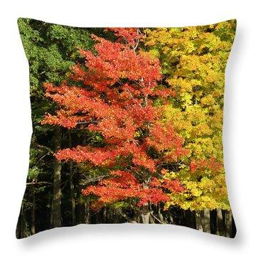 Forest Door Throw Pillow