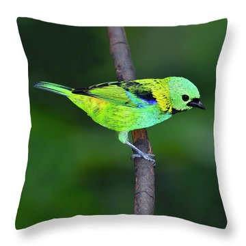 Forest Edge Throw Pillow by Tony Beck