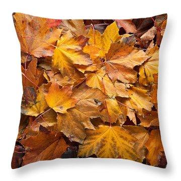 Forest Floor Throw Pillow by Steve Gadomski