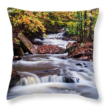 Throw Pillow featuring the photograph Forest Gem by Parker Cunningham