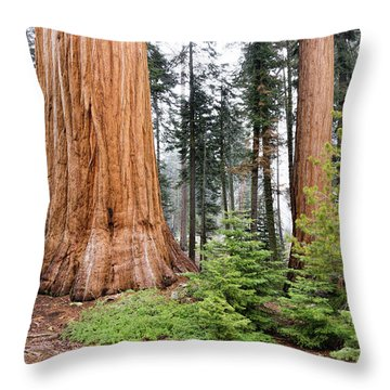 Throw Pillow featuring the photograph Forest Growth by Peggy Hughes