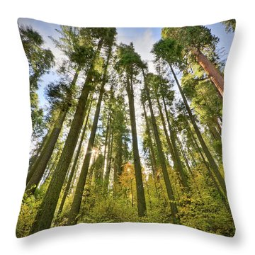 Forest Of Light Throw Pillow