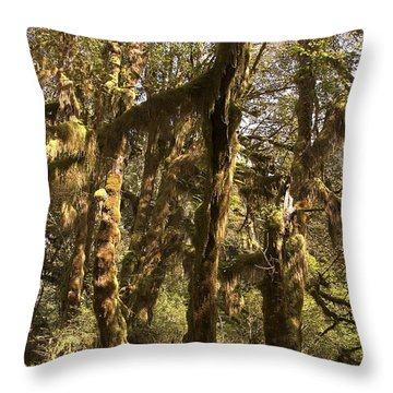 Forest Setting In Hoh Rain Forest Throw Pillow