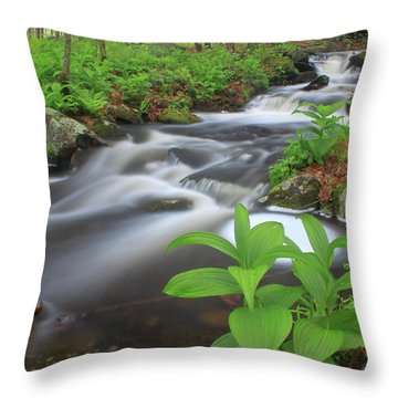 Forest Stream And False Hellabore In Spring Throw Pillow by John Burk